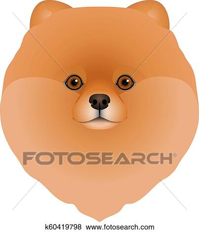 Freigestellt Buntes Kopf Gesicht Von Pomeranian Deutsch Spitz Weiß Hintergrund Flache Karikatur Rasse Hund Portrait Pom Pom Clip