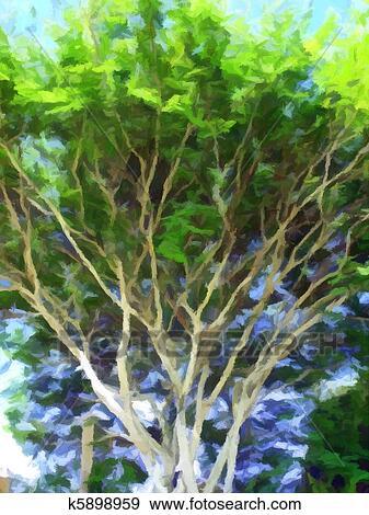 Stock Illustration Of Spindly Tree K5898959