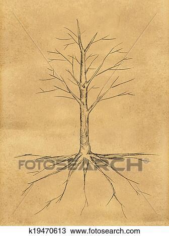 Dibujo - árbol, bosquejo, no, hojas, raíz, en, papel k19470613 ...