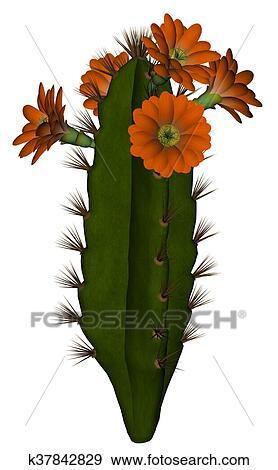 サボテン で 花 3d Render イラスト K37842829 Fotosearch
