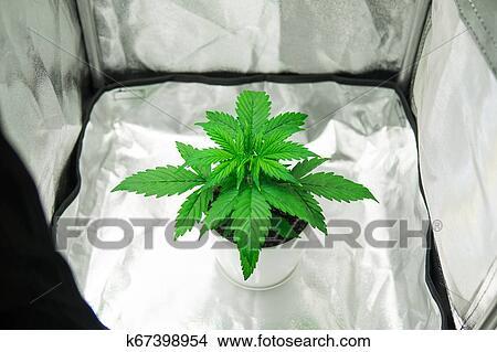 Коробка для марихуаны для себя на один раз покурить конопли