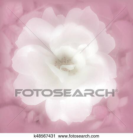Antique Images: Free Pink Shabby Chic Rose Flower Botanical Art Printable  Crafting Image