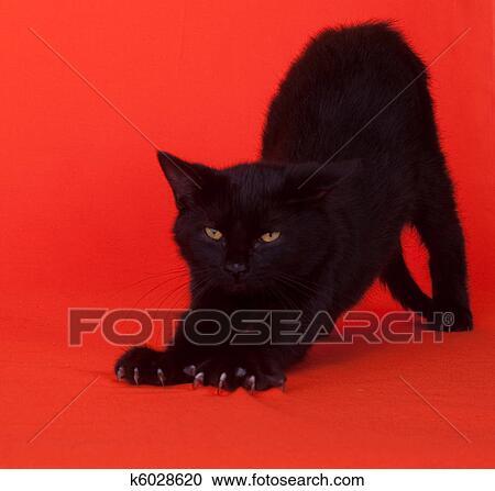 Gatto Nero Stiramento Archivio Fotografico K6028620