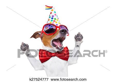 anniversaire surprise chien