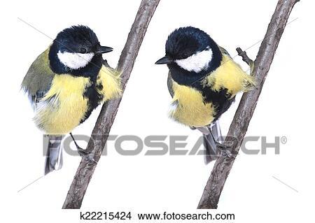 Pták Sýkorka modřinka se zvukem plyšová je 12cm velká.