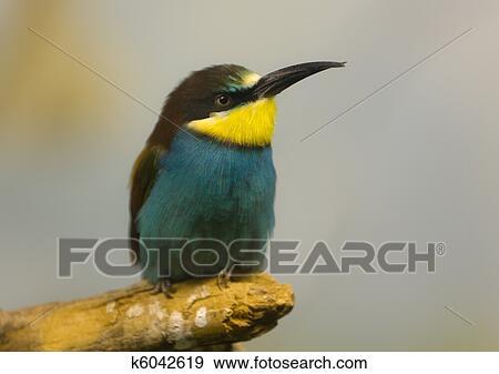 stock fotograf vogel mit a langer schnabel k6042619 suche