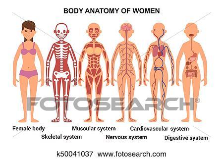 Clip Art - anatomía, de, el, hembra, body., anatómico, poster ...