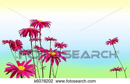 Pâquerette Rose Fleurs Sur Couleurs Pastel Dessin