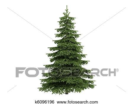 Archivio Illustrazioni Abete Rosso O Picea K6096196 Cerca