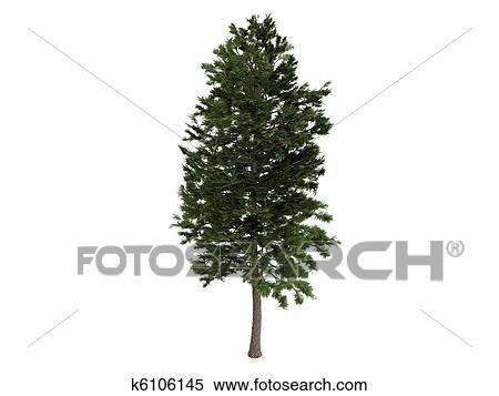 Ilustrace Z Mnoziny Borovice Nebo Pinus Sylvestris K6106145