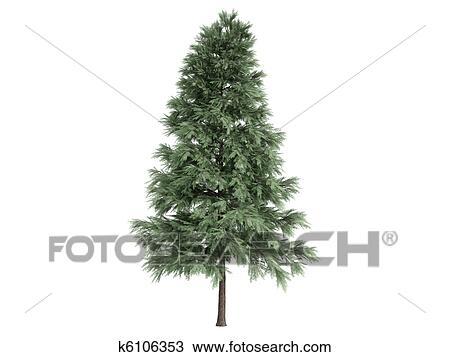Kresba Borovice Nebo Pinus Sylvestris K6106353 Hledat Klipart