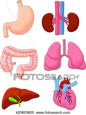 Clipart of Cartoon Internal organ set k20853605 - Search Clip Art ...