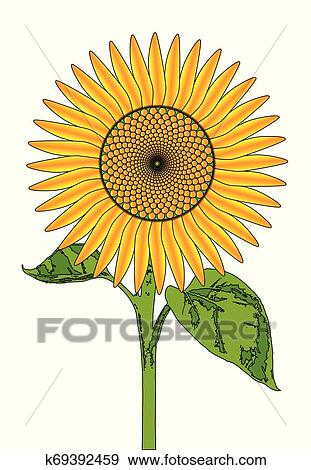 Gigante Luminoso Girassol Desenho Clipart K69392459 Fotosearch
