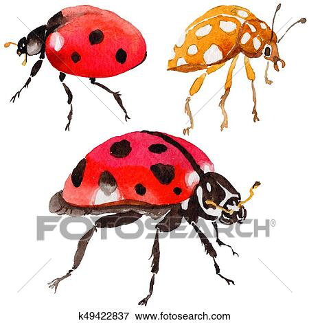 9b513afa86736 Exotic ladybug wild insect in a watercolor style isolated. Full name of the  insect: ladybug. Aquarelle wild insect for background, texture, wrapper  pattern ...