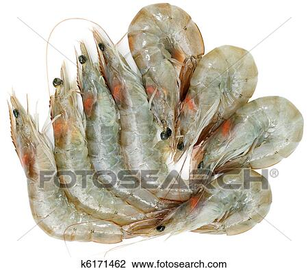 Stock Photo Of Raw Shrimps K6171462 Search Stock Photography