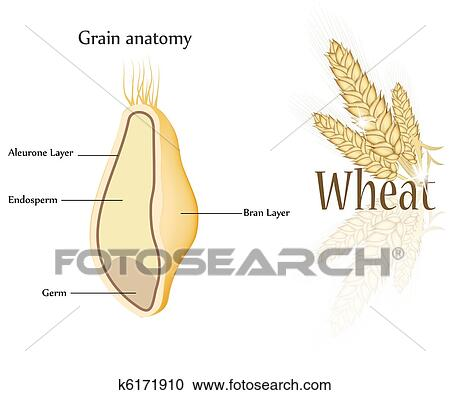 Clipart Of Wheat And Grain K6171910 Search Clip Art Illustration