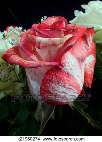 Rouge Blanc Mariage Colore Bouquet Fleurs Image