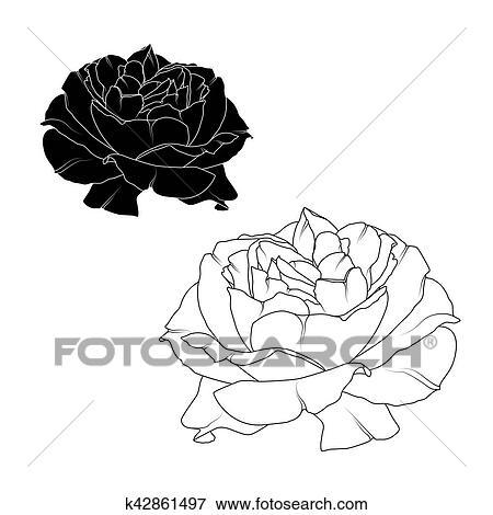 Clipart Realiste Rose Fleur Noir Blanc Isole K42861497