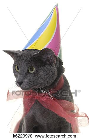 Cat With Birthday Hat And Ribbon Isolated On White