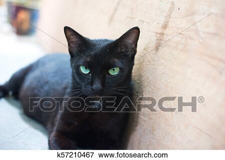 Na snímku kočička