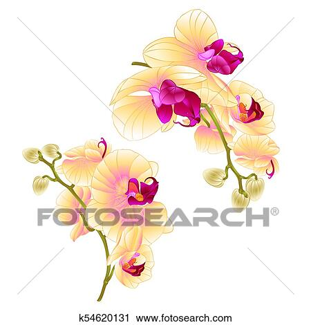 Branches Orchids Yellow Tropical Plant Phalaenopsis Set First