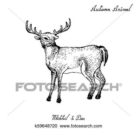 Transparent Whitetail Deer Clipart - Dove Hunt Clip Art , Free Transparent  Clipart - ClipartKey