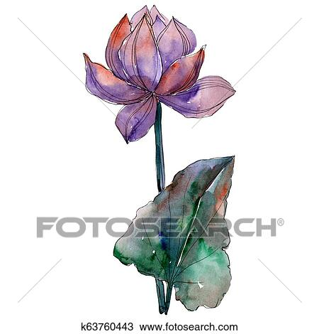 Purple Lotus Flower With Green Leaf Watercolor Background
