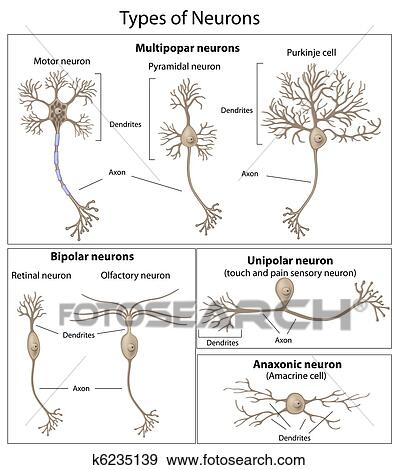Clip art of types of neurons k6235139 search clipart illustration types of neurons eps8 ccuart Images