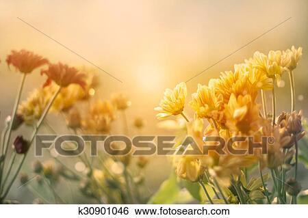 Hazır Görüntüler çiçekler Tarla Asker çöküş Içinde Pastel