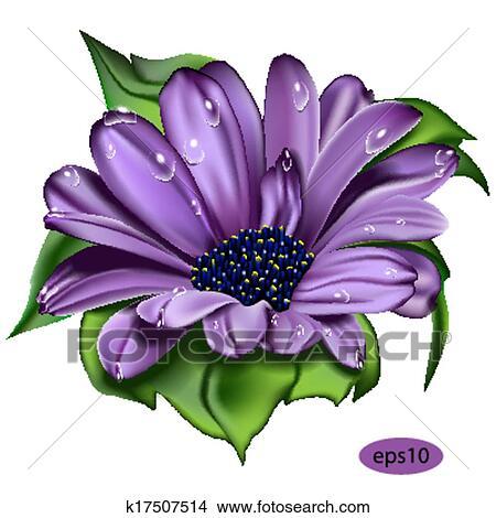 Clipart Beau Fleur Violette K17507514 Recherchez Des Clip Arts