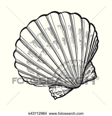 塩水 ホタテ貝 海シェル 隔離された スケッチ スタイル ベクトル