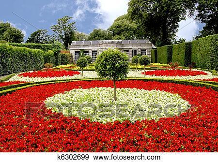 Begonia Garden Stock Photo K6302699 Fotosearch