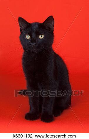 Gatto Nero Su Sfondo Rosso Archivio Immagini K6301192 Fotosearch