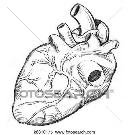 Dessin Coeur Humain banque d'illustrations - coeur humain, dessin k6310175 - recherche