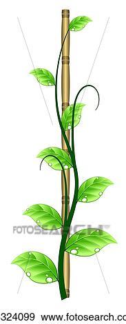 Plante Grimpante Croître Sur A Bambou Crosse Banque D Illustrations