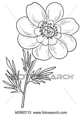 Dessin fleur adonis contour k6360713 recherchez des - Dessin contour ...
