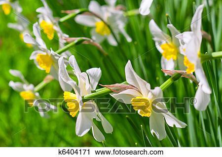 Hazır Fotoğraflar Güzel Beyaz çiçek Verir üstünde Yeşil Arka