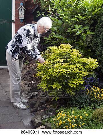 Stock Photography   Grandma Garden. Fotosearch   Search Stock Photos,  Pictures, Prints,