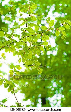 Raggi Di Il Sole Brilla Depressione Foglie Con Sfondo Verde