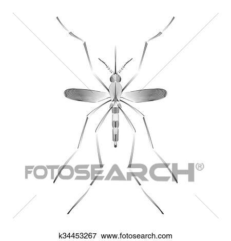 Febbre, zanzara, specie, aedes, aegyti, isolato, bianco, fondo Clip Art