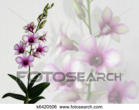 Pink Orchid Wallpaper Stock Photograph K6420506 Fotosearch