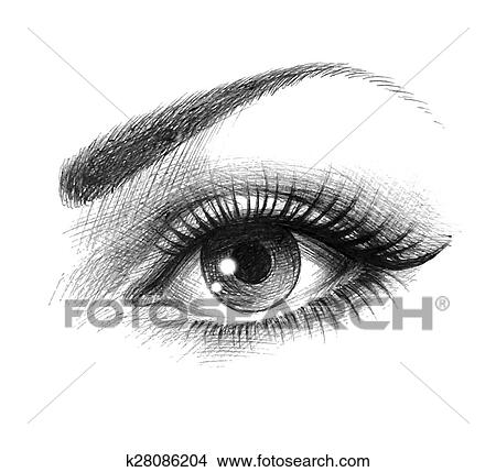 Clipart of Beautiful eyes of a young woman k28086204 ...