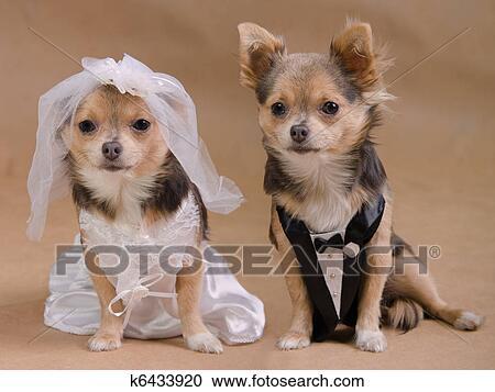 Vestidos de novia en chihuahua