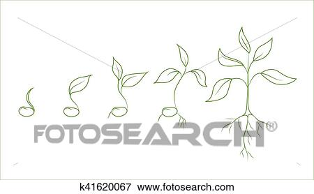 Haricot Rouge Plante Croissance Phases Clipart