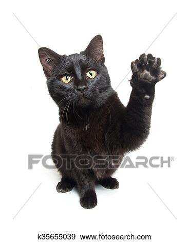 Cute Black Cat Swinging Its Paws Stock Photo K35655039 Fotosearch
