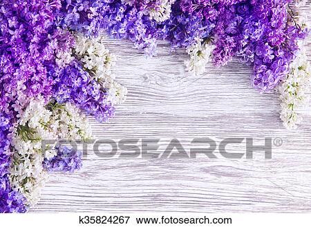lils flor fundo flores flores cr de rosa ligado madeira prancha