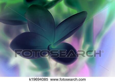 Banque D Image Fleur Tropicale Frangipanier Inverser Bleu
