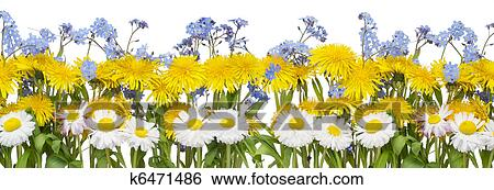 Stock images of real spring flowers border k6471486 search stock real spring border from yellow dandelions white daisies and blue forget me nots myosotis flowers isolated on white mightylinksfo