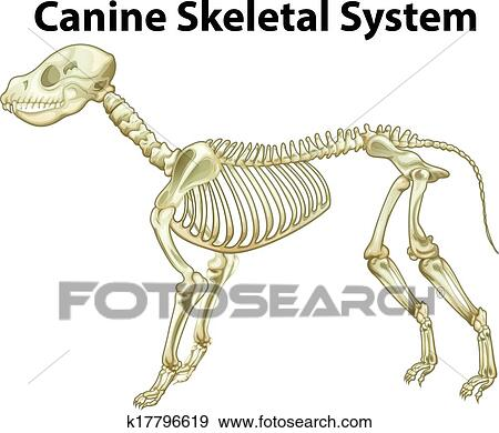 Clip Art Of Skeletal System Of A Dog K17796619 Search Clipart
