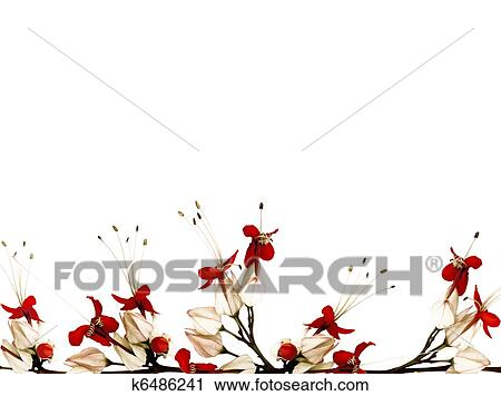 Stock Photography Of Red Black And White Butterfly Flower Border